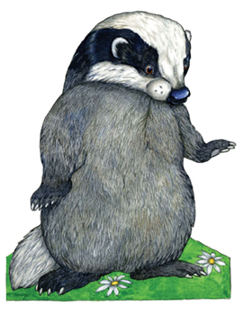 Young Boy Badger