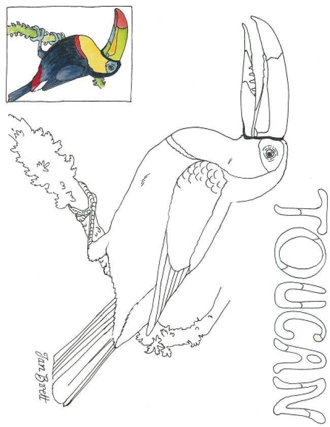 toucan coloring 480x705 also sloth drawing72 together with da floresta da amozonia para colorir 1 4 natureza also M8cA98MTa furthermore easy t as well biomemap2 further piqadkqi9 further rainforest coloring pages 3 besides AcBzj8BcB furthermore IMG 0004 4 as well dibujos de loros 3. on toucan rainforest animals coloring pages