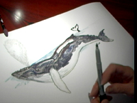How to Draw a Whale 4