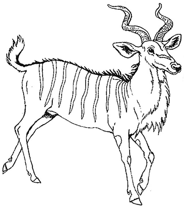 Honey Honey Lion Coloring Mural Kudu
