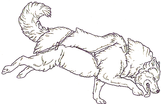 snow dog coloring pages - photo#23