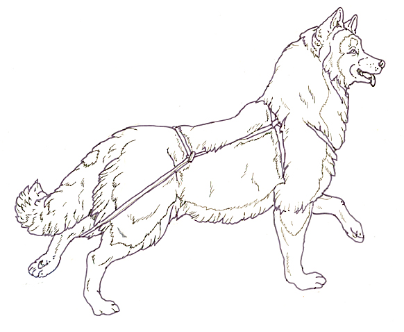 sled dog coloring pages - dog sled drawing the image kid has it