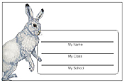 Rabbit Name Tags