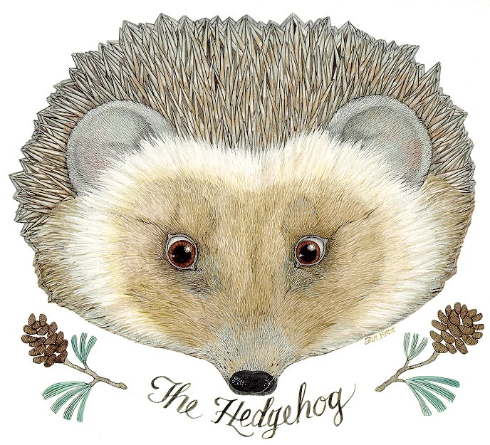 The Hedgehog Mask
