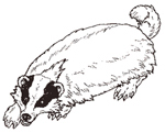 The Badger small size