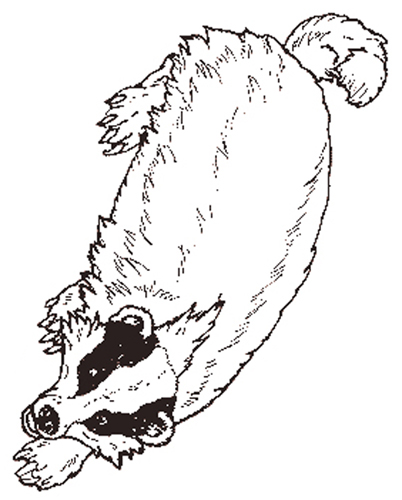The Badger coloring page reversed