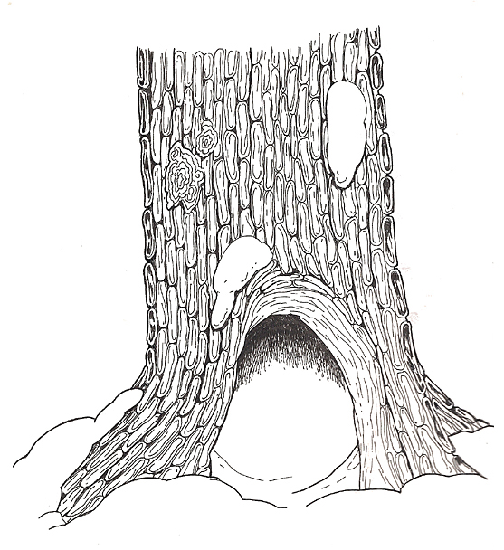 The Mitten Hollow Tree Base coloring page
