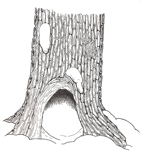 Hollow Tree reversed