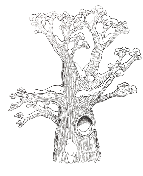 Hollow Tree top