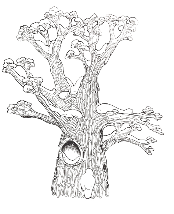 Hollow Tree top reversed