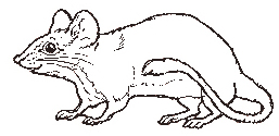 The Mouse coloring page
