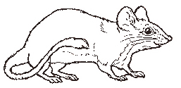 The Mouse coloring page reversed