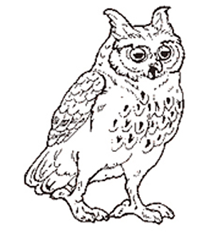 The Owl reversed