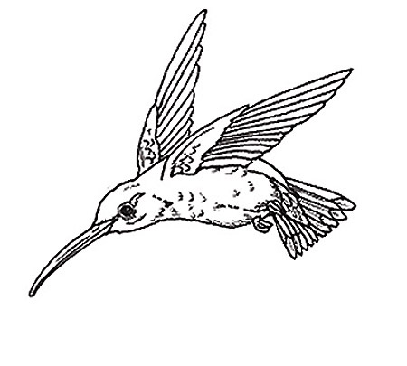 Alphabet and Birds coloring pages - Plus Coloring | 405x450