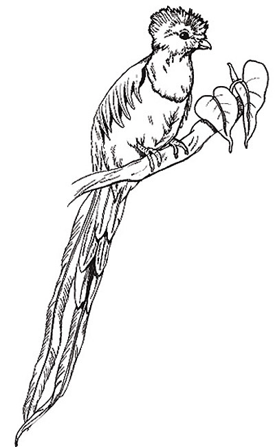 quetzal colouring pages (page 2)