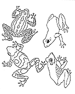 Rainforest Animals Coloring Pages Butterfly Coloring - Cute ... | 188x150