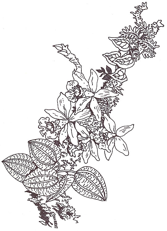 Umbrella Coloring Orchid Branch Segment