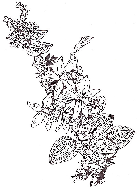 Orchid Coloring Page Umbrella coloring mural orchid