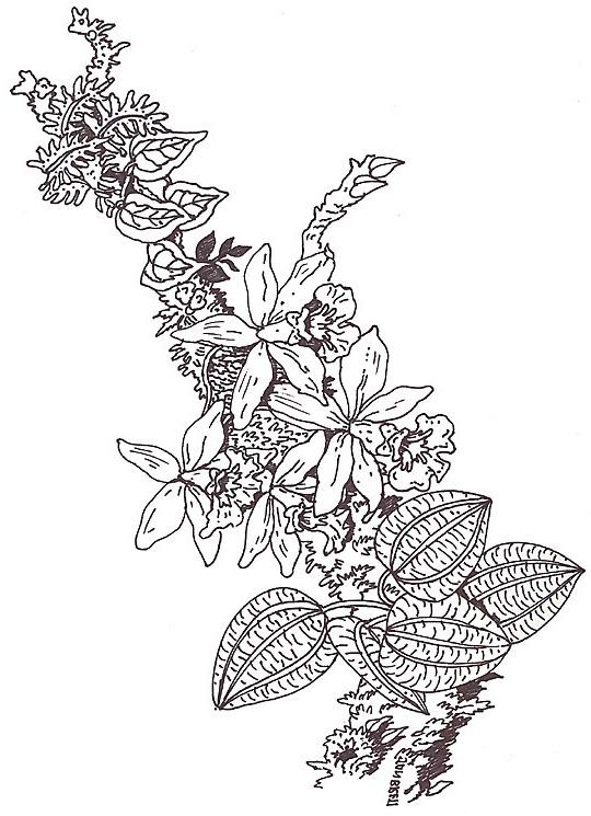Umbrella Coloring Mural Orchid Branch Segment Reverse