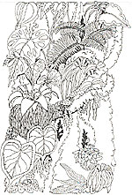 the umbrella coloring mural - Rainforest Coloring Pages
